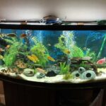 Where to place fish tank in home