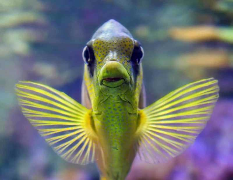 Best saltwater fish for 100 gallon tank