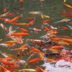 What to feed fish