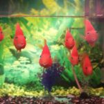 Which fishes are good for aquarium at home
