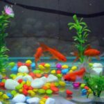 Things you need for a fish tank