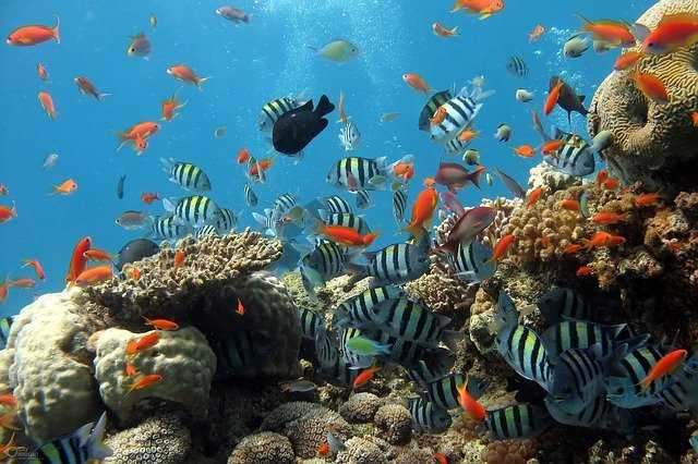 5 most beautiful large-type hard corals