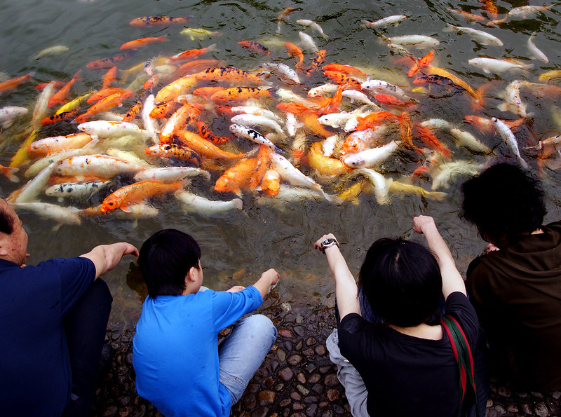 Live fish food - a delicacy or a necessity?