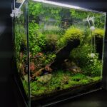 Mistakes that novice aquarists make when setting up and starting up an aquarium.