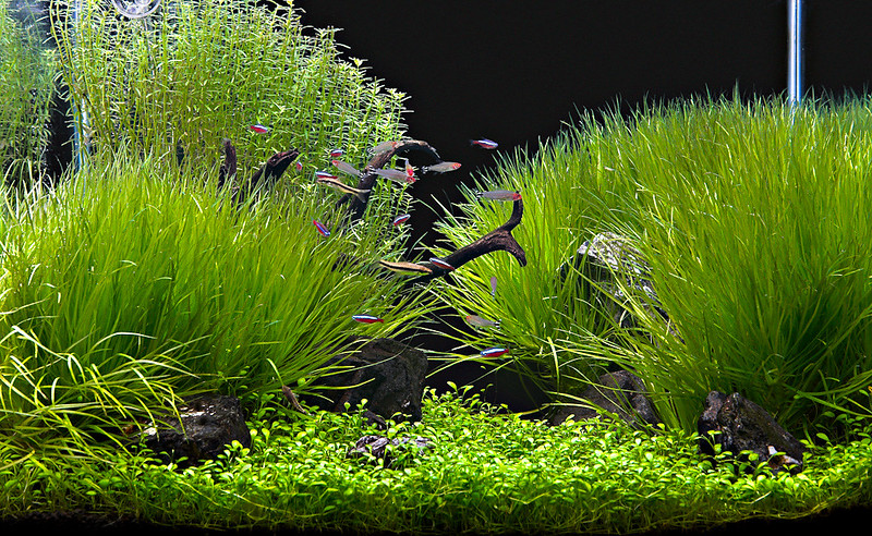 Recommendations for beginner aquarists for choosing and planting vegetation.