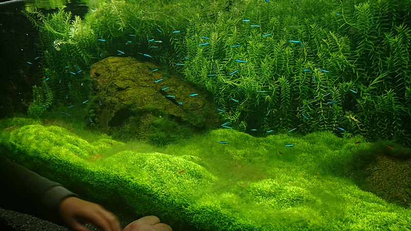 What to do if you have brown plaque in the aquarium