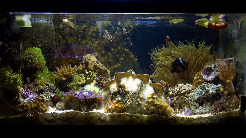 Fish Selection Tips for New Aquarists