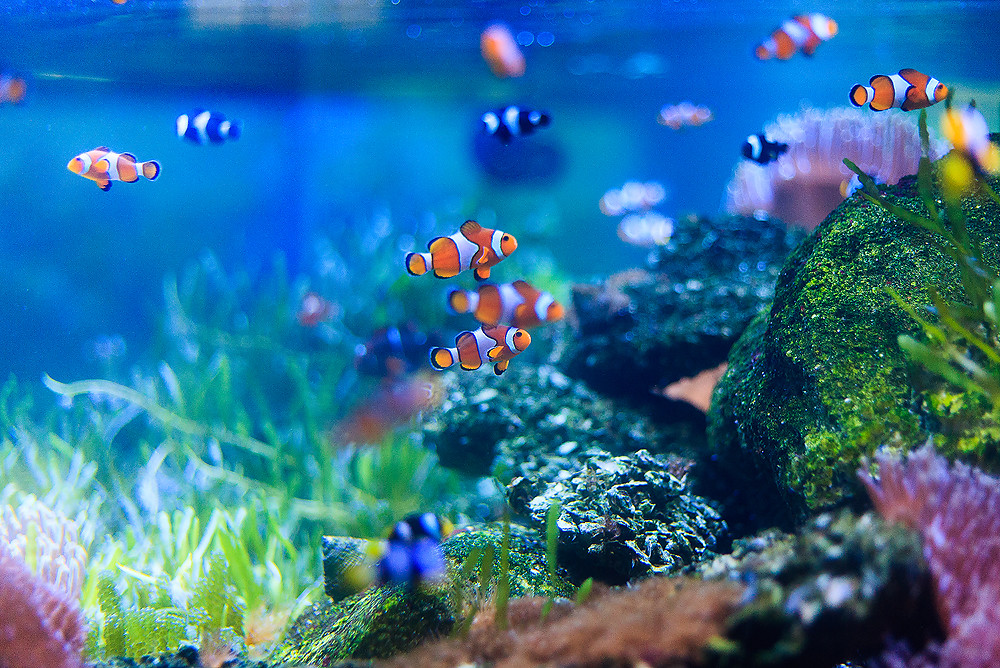 Aquarium psychotherapy: rules and facts.