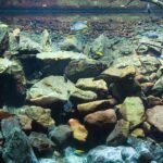Hardscape - a spectacular landscape of minerals and driftwood in your aquarium