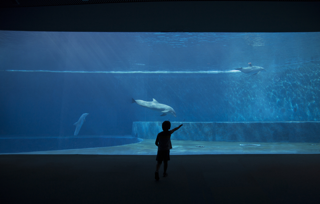 Aquarium for a child: pros, cons, recommendations for choosing.