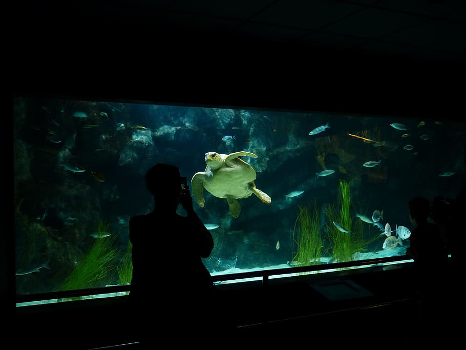 Equipment for a modern aquarium: everything you need