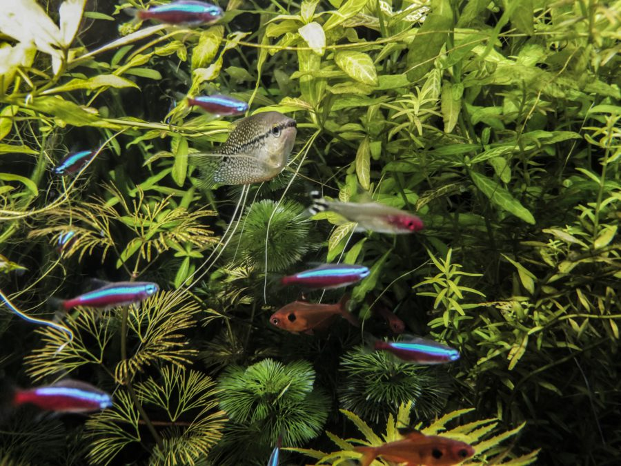How to care for aquarium plants at home